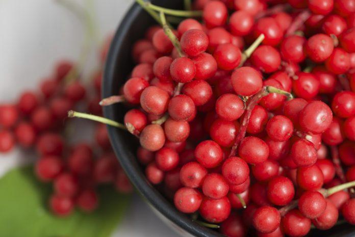 Cytryniec chiński – orientalny lek medycyny naturalnej