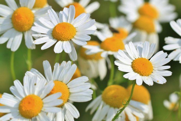 Skuteczne suplementy roślinne łagodzące dolegliwości układu trawiennego