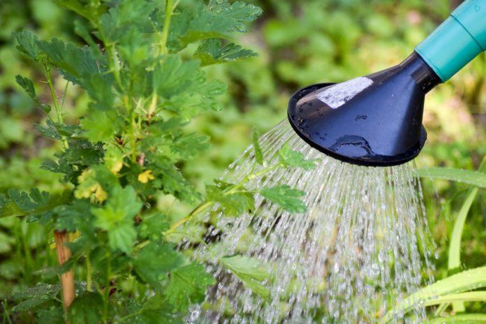 Allelopatia- wzajemne oddziaływanie roślin. Jak je wykorzystać w ogrodzie?
