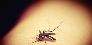 Jak się pozbyć komarów, mrówek i much? Przegląd środków