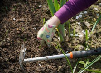 Zakładamy ogródek – jak dopasować rośliny do pH gruntu?