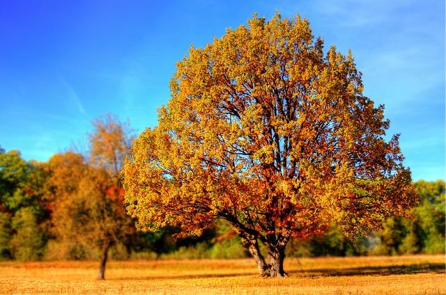 odporność jesienią