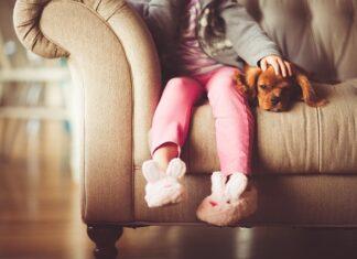 sofy dla psa